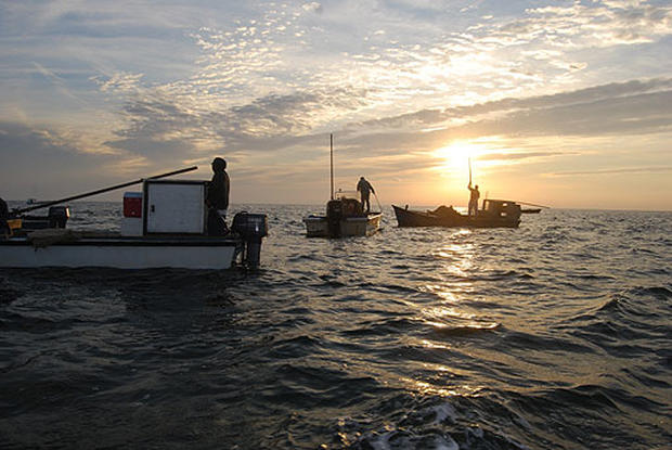 Drought A Drain To Oyster Trade