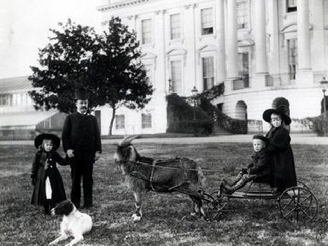 Presidential Pets Pictures Cbs News