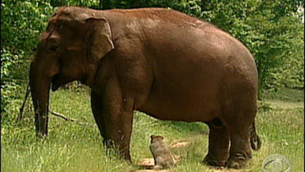 Tarra and Bella (elephant and dog)