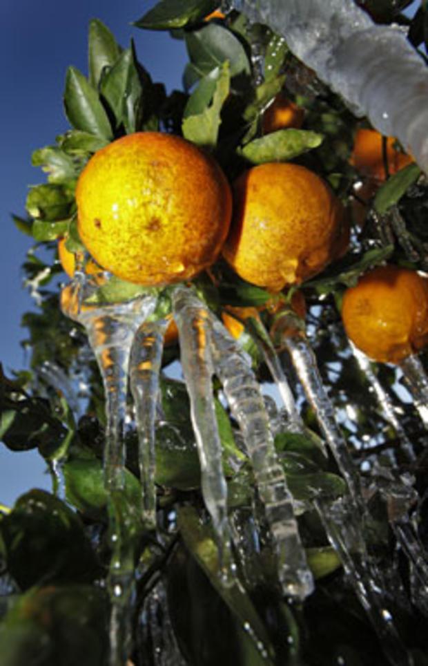 !!-oranges.jpg