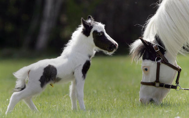Pint-Sized Pony