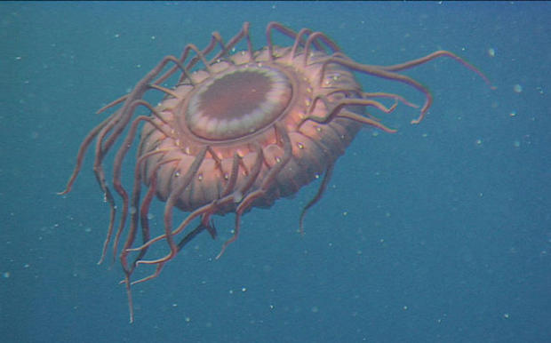 The Weirdest Sea Creatures You've Ever Seen