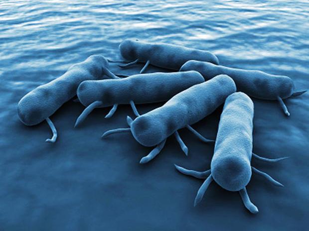 Salmonella-Bacteria.jpg