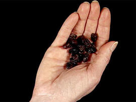 Pa. Woman Blames Gin-soaked Raisins, Not Drinking, For Probation Violation