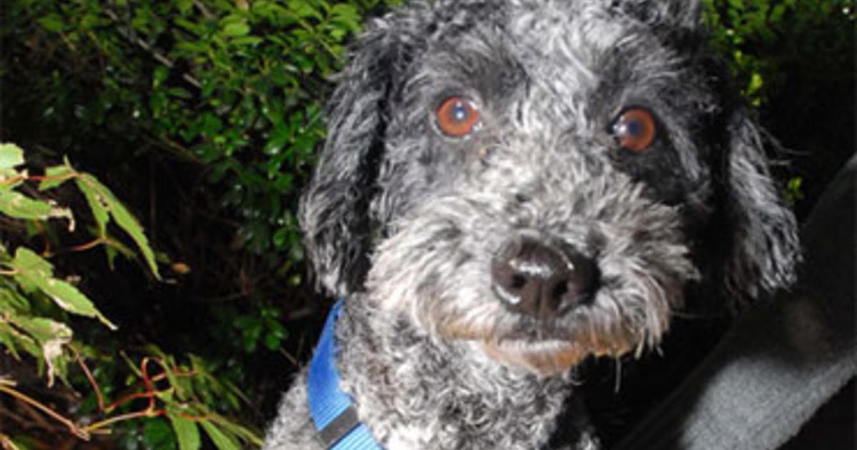 top tips for adopting a shelter dog cbs news. Black Bedroom Furniture Sets. Home Design Ideas