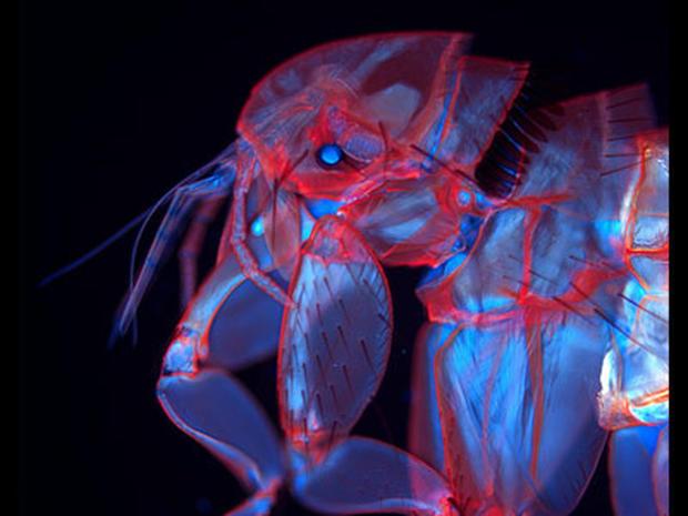 Nikon's 20 Top Microscopic Photos of 2010