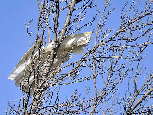 002-debris-in-tree.jpg