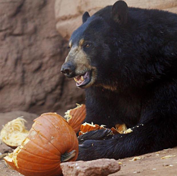 009-bear.jpg