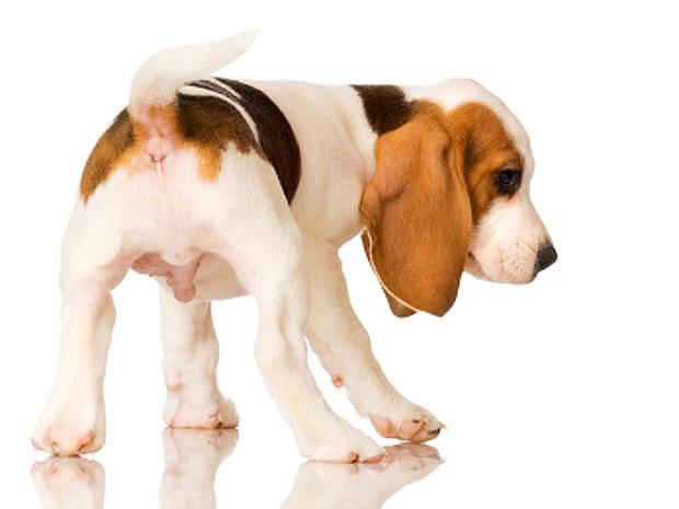 dog-butt.jpg