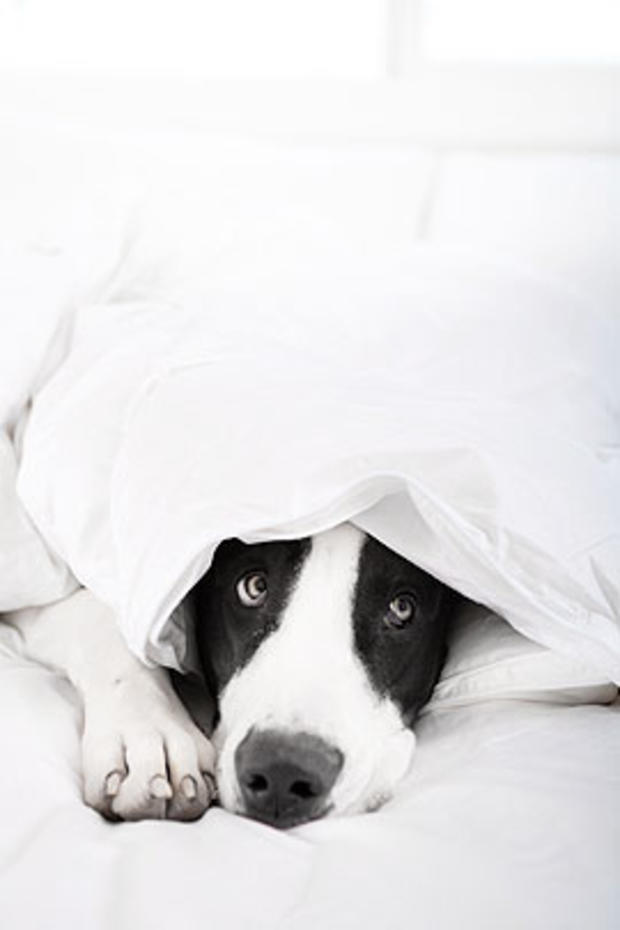 dog-under-blanket.jpg