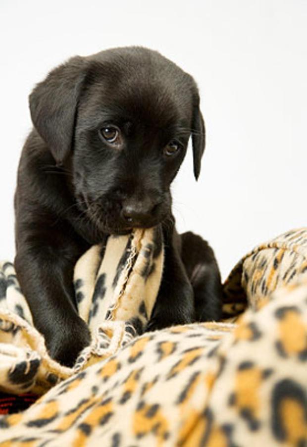 chewing-blanket.jpg