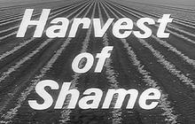 """1960: """"Harvest of Shame"""""""