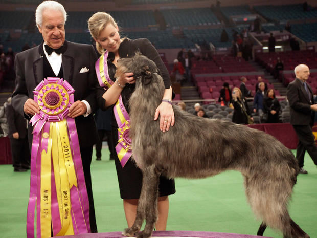 Scottish Deerhound: A New Crown for and Ancient Breed