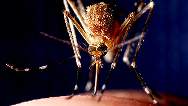 West Nile virus: How to stay safe