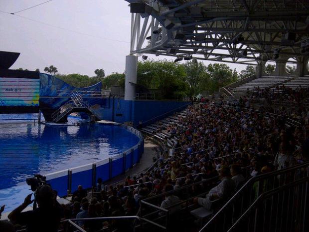 Killer Whale Returns to SeaWorld