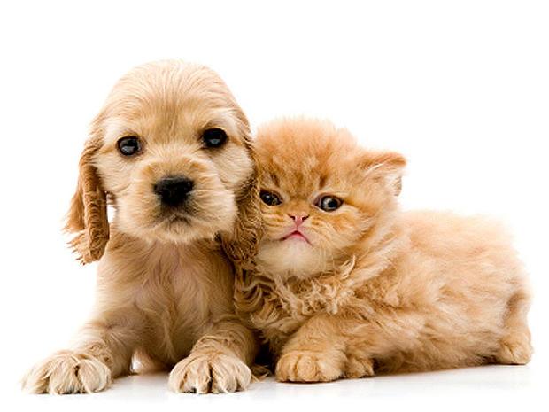 dog_cat_iStock_000005859307.jpg