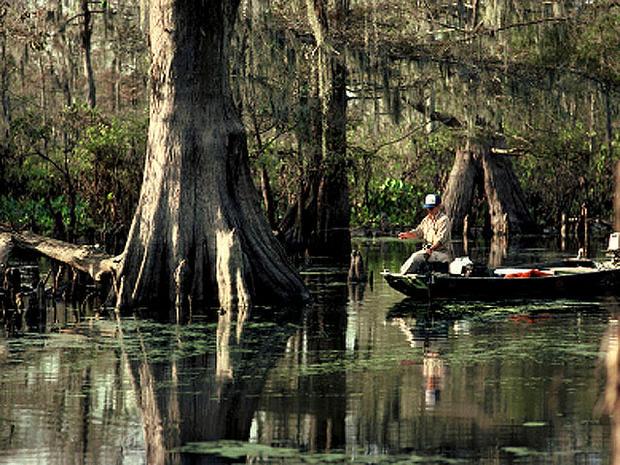 Louisiana_swamp_iStock_0000.jpg