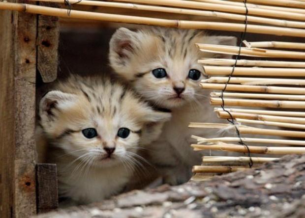 tinycats.jpg