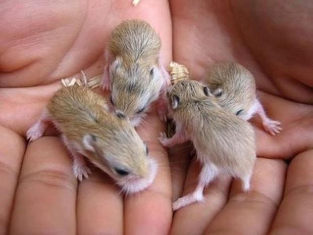 the_smallest_pets_29.jpg