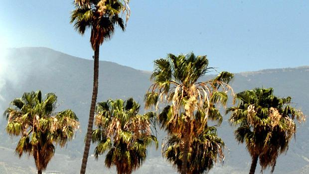 palmtreesgeneric_fullwidth.jpg