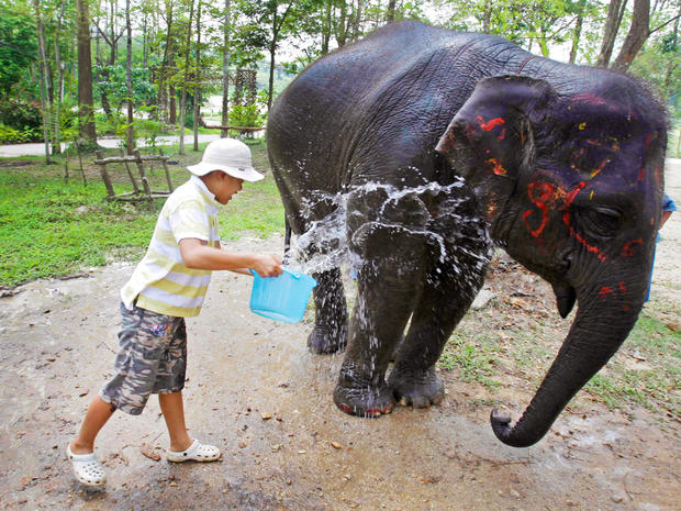 elephant-therapy4-AP110421058162.jpg