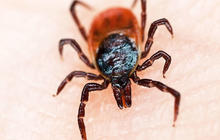 Lyme disease lies - and truths