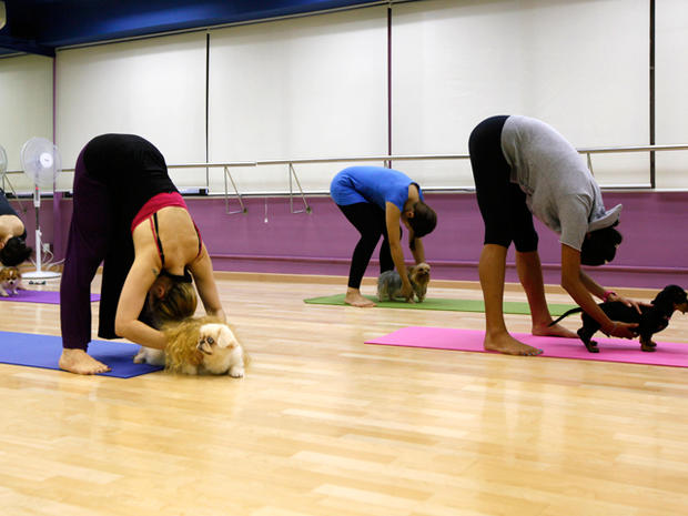 Doga: Aligning mind, body - and paws?