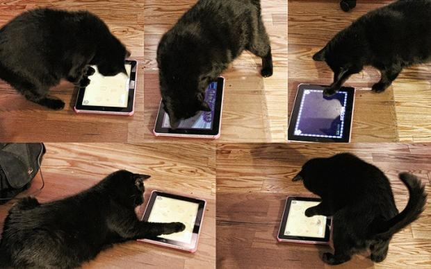 iPad apps for cats? You better believe it!