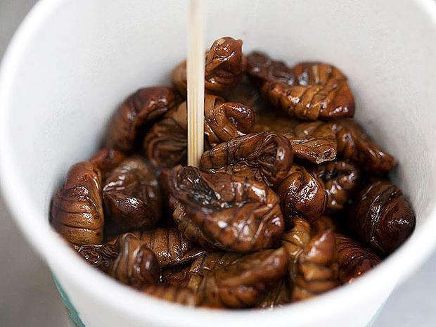 silkwormpupae.jpg