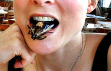 Good grub: 13 edible bugs