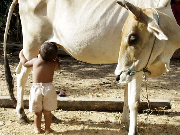 Breast-feeding boy goes bovine
