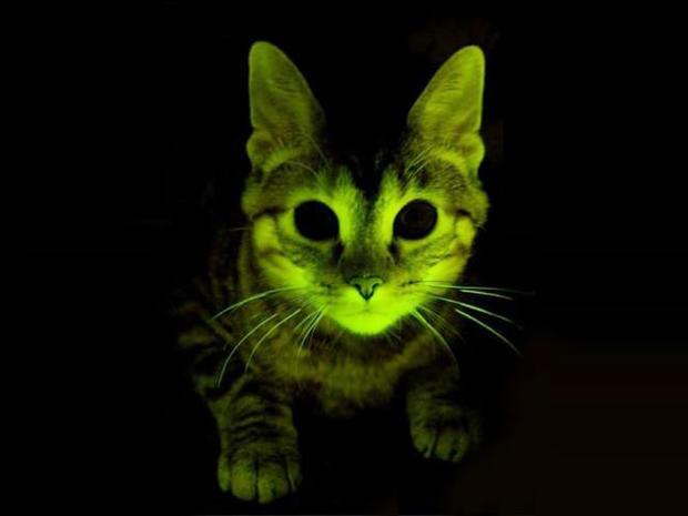 glow, cat, 4x3