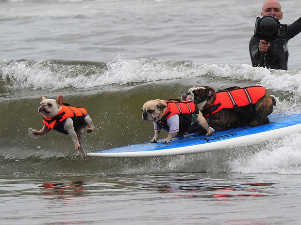 dog_surfing_9.jpg