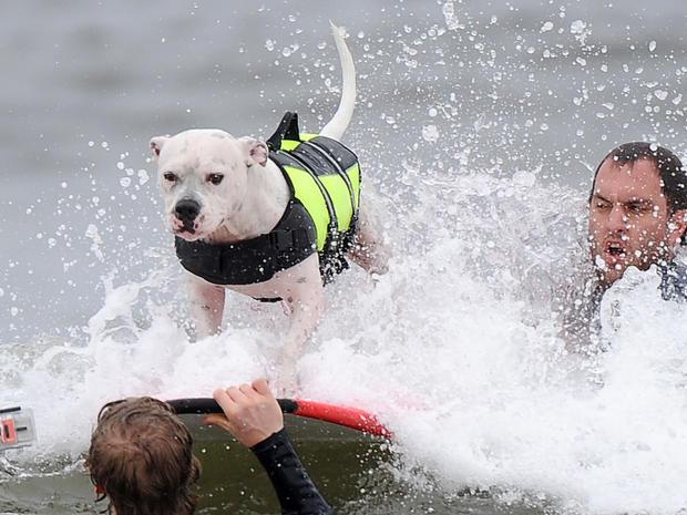 dog_surfing_4.jpg