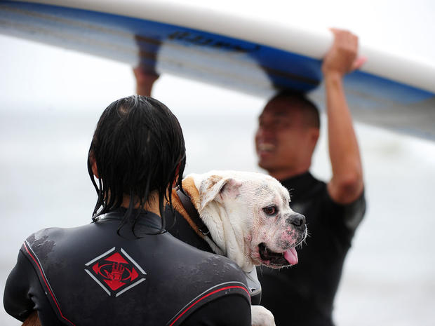 2011 Surf City Surf Dog competition