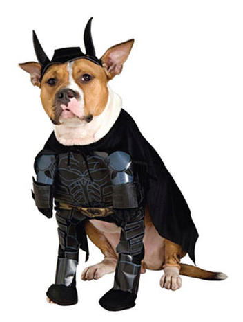 Dogs in geeky costumes