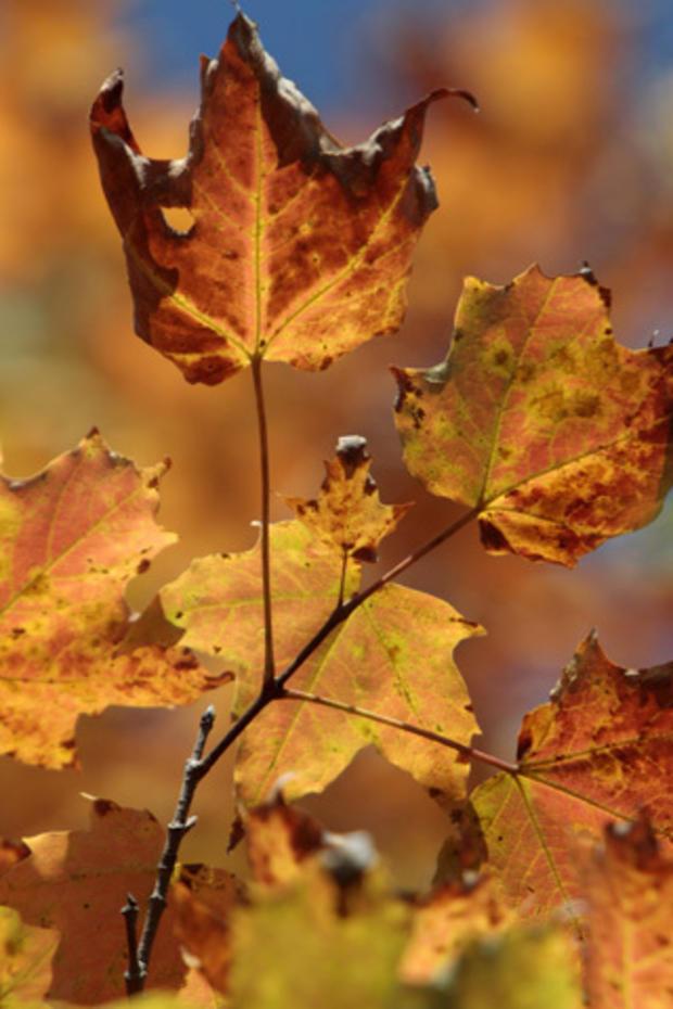 Fall_Foliage_AP110916022491.jpg