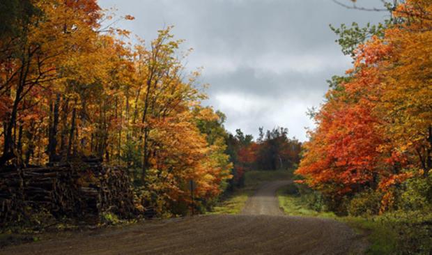 Fall_Foliage_AP110925113232.jpg