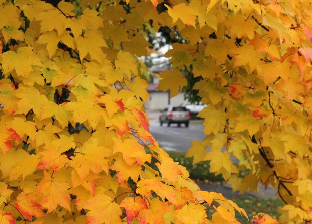 Fall_Foliage_AP110926117059.jpg