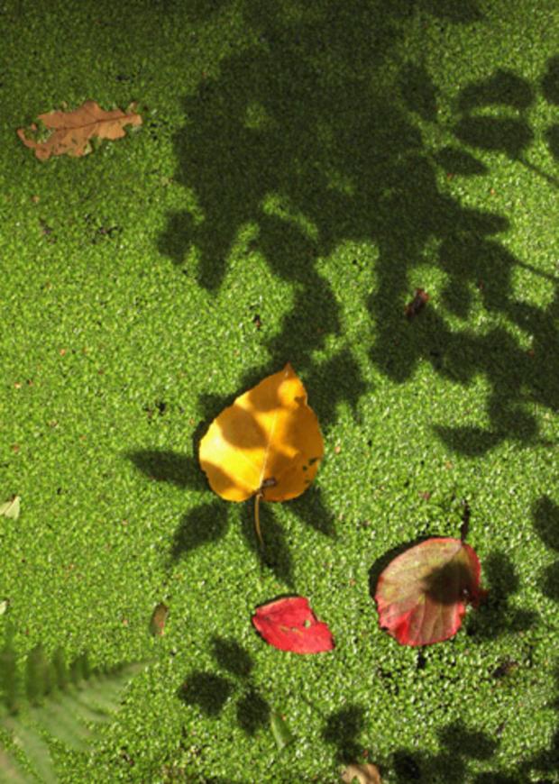 Fall_Foliage_123981478.jpg