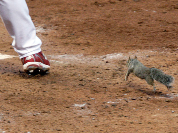 Skip Schumaker and squirrel