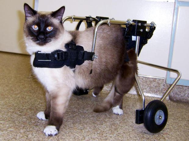 catstandsonwheels.jpg