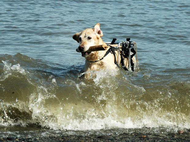 doginwateronwheels.jpg