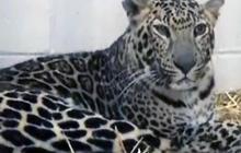 Ohio residents seek tougher exotic animal laws