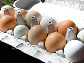 eggs, stock