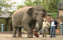 Travel Tips: Elephant vs. Luggage