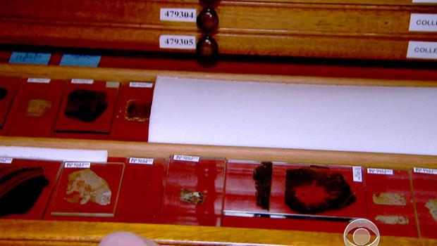 Charles Darwin, samples