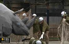 Rhino escape rehearsal for Japan zoo
