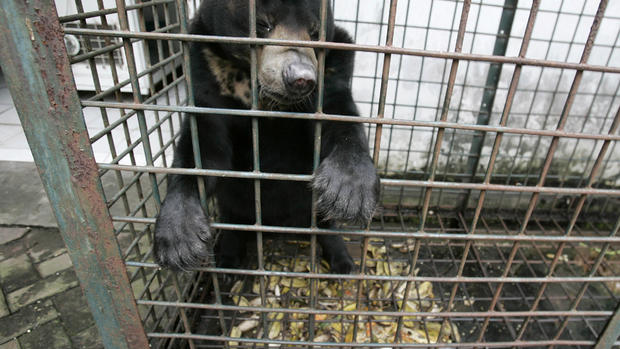 """Suffering at Indonesia's """"nightmare zoo"""""""
