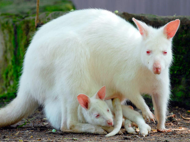 Rare albino animals